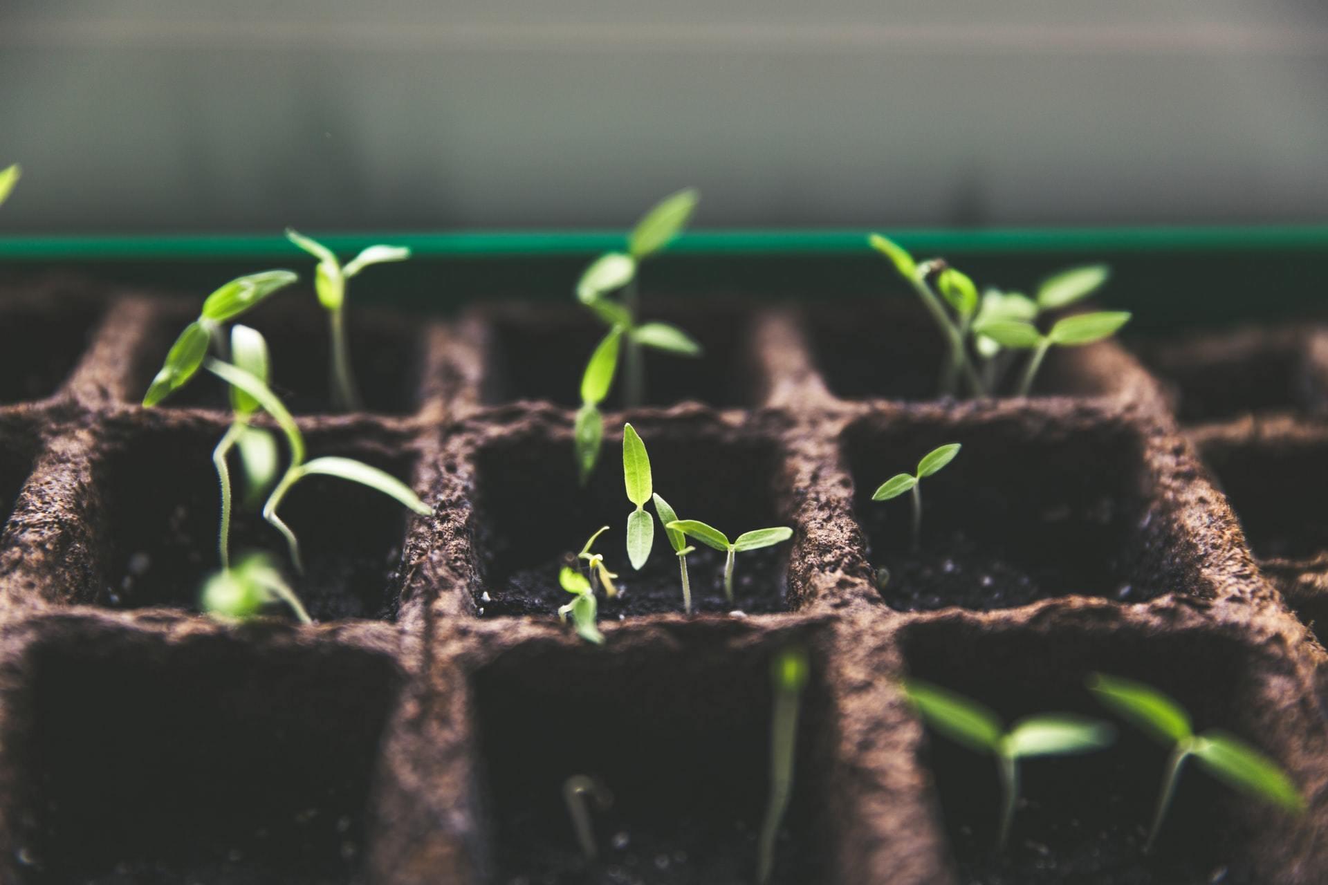 Pourquoi commencer un groupe de croissance un concept vulgariser par Neil Cole